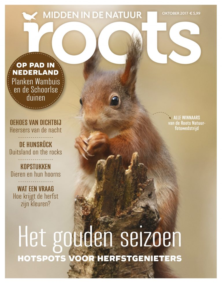 COVER ROOTS Oktober 2017